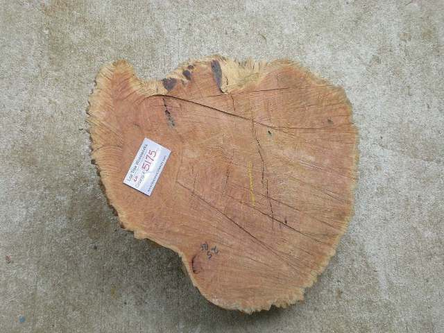Coolibah Burl 20 x 17 x 7 (inches)