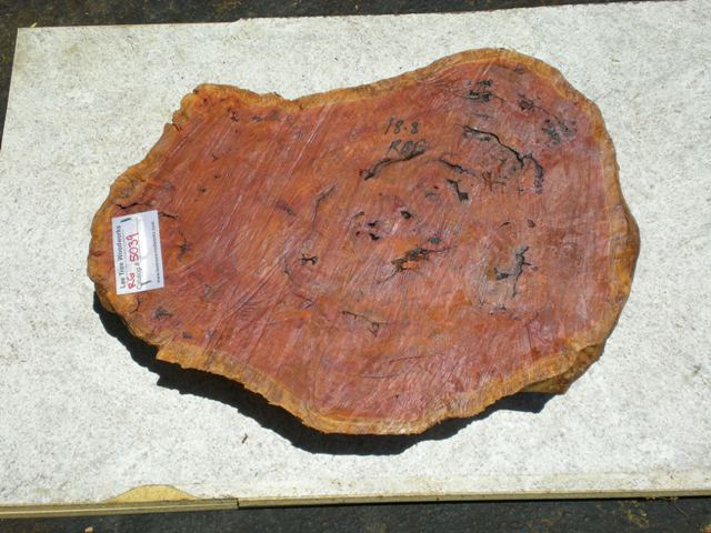 Red Gum Burl 22 x 15 x 6 (inches)