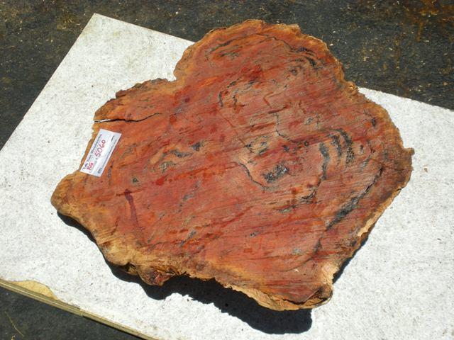 Red Gum Burl 23 x 18 x 9 (inches)
