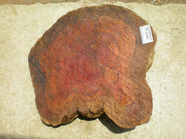 Red Gum Burl 27 x 23 x 8.5 (inches)